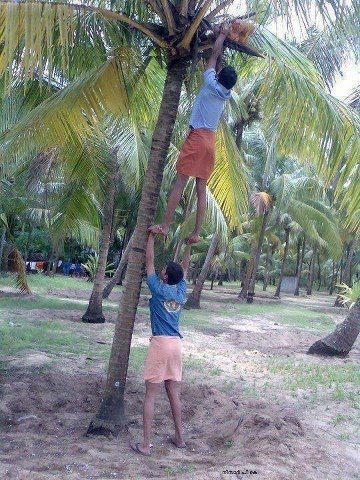 Funny Photos from India, coconut