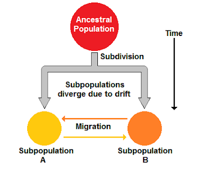 drift and mutation in splitting populations