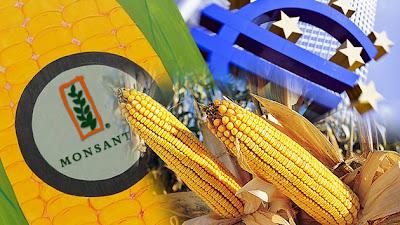 Monsanto no echa raíces en Europa y se centrará en la exportación de transgénicos