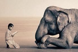 Kisah Orang Shalih & Gajah