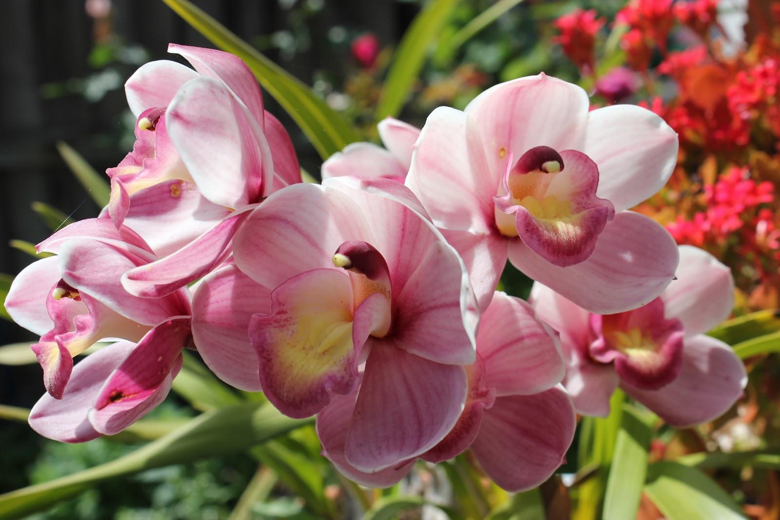 Cuộc Sống và Thi Ca: Mùa Xuân và những cánh hoa trong vườn