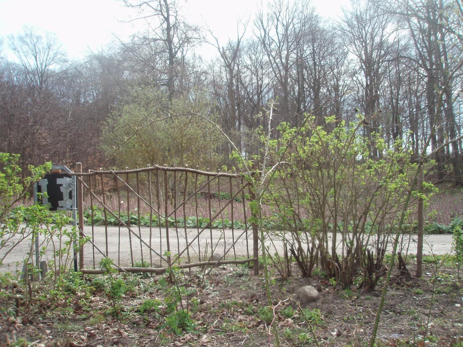 Vandre blandt ege: april 2015