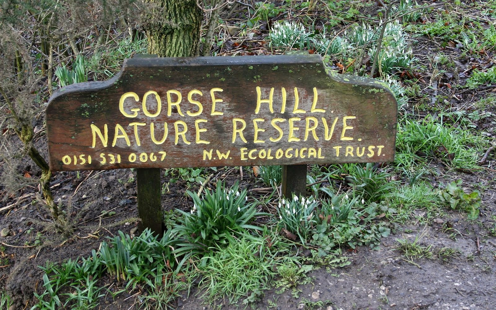 Gorse Hill Nature Reserve