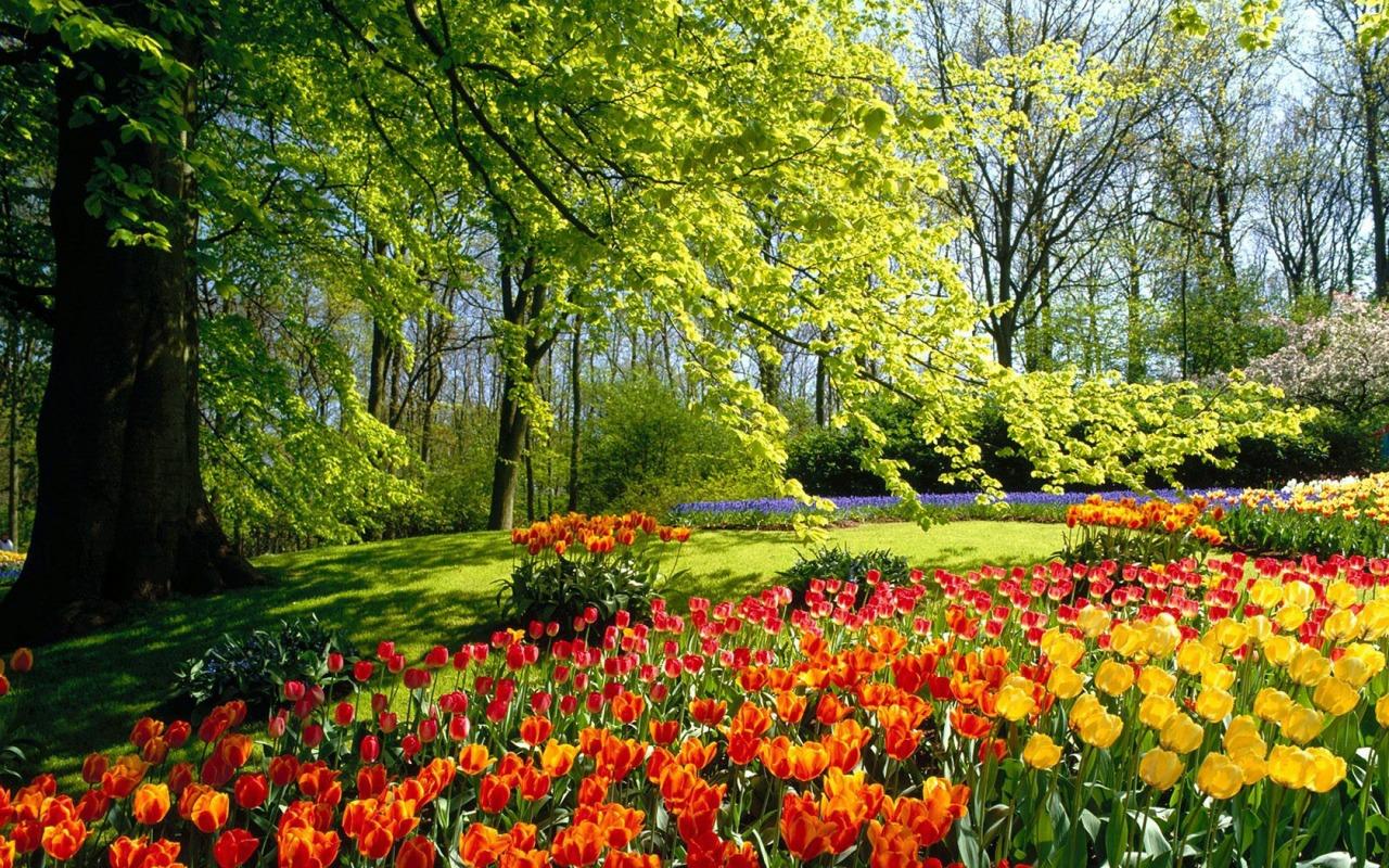 http://4.bp.blogspot.com/-r9WdrC86yjA/T045aRMr_BI/AAAAAAAADBQ/r9bpuqWU7jU/s1600/spring_park_wallpaper_spring_nature_wallpaper_1280_800_widescreen_1215.jpg