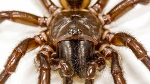 Spider venom insecticide
