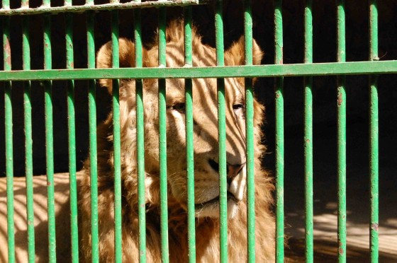 zoo argument Arguments for zoos •by bringing people and animals together, zoos educate the public and foster an appreciation of the animals this exposure and education motivates people to protect the animals this exposure and education motivates people to protect the animals.