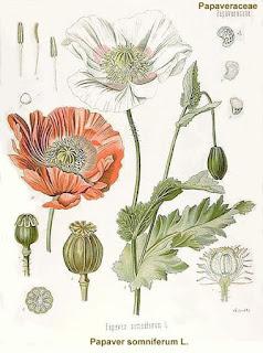 أنواع النباتات والعقاقير المؤديه للأدمان