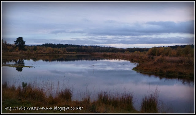 Longmoor Ranges - Heathland landscape at dusk