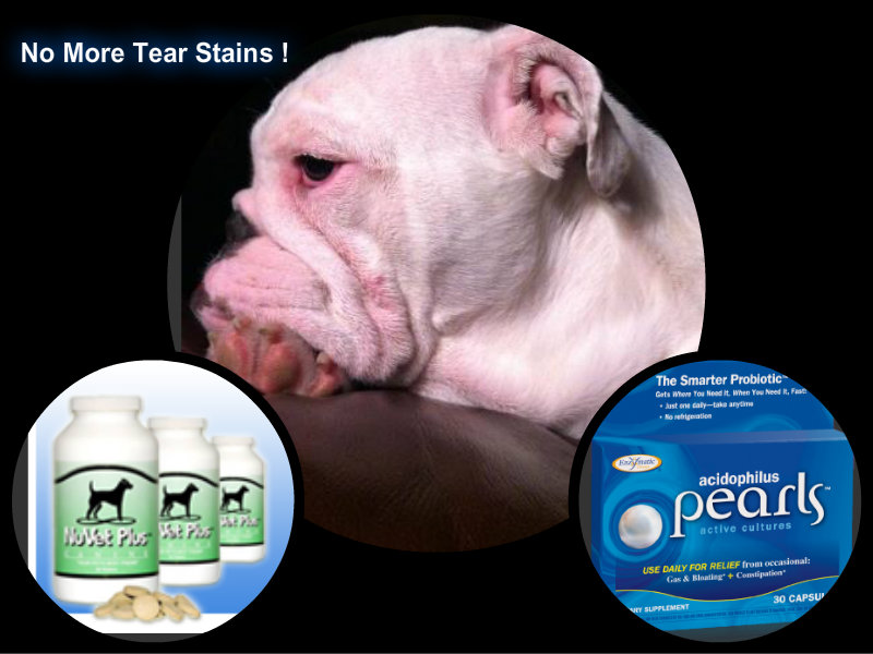 Yeast Infection in Dog Paws Symptoms Home Remedies and