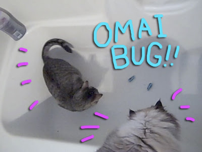 cat-vs-bug