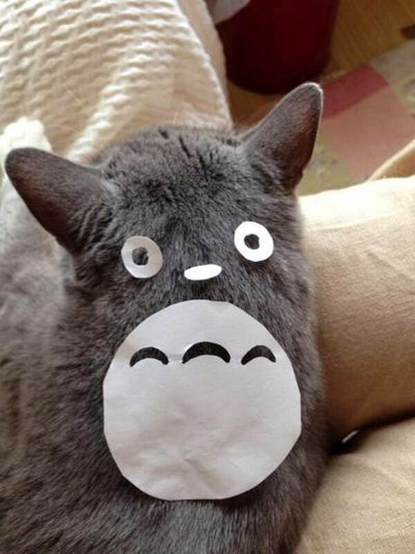 Funny cats - part 94 (40 pics + 10 gifs), cat pictures, cat with paper on his back make it looks like Totoro