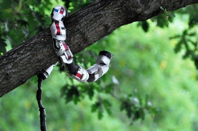 شاهد بالفيديو الروبوت الثعبان جاهز لخدمة الجيش الأمريكي ضد العدو! snakebot-in-tree.jpg