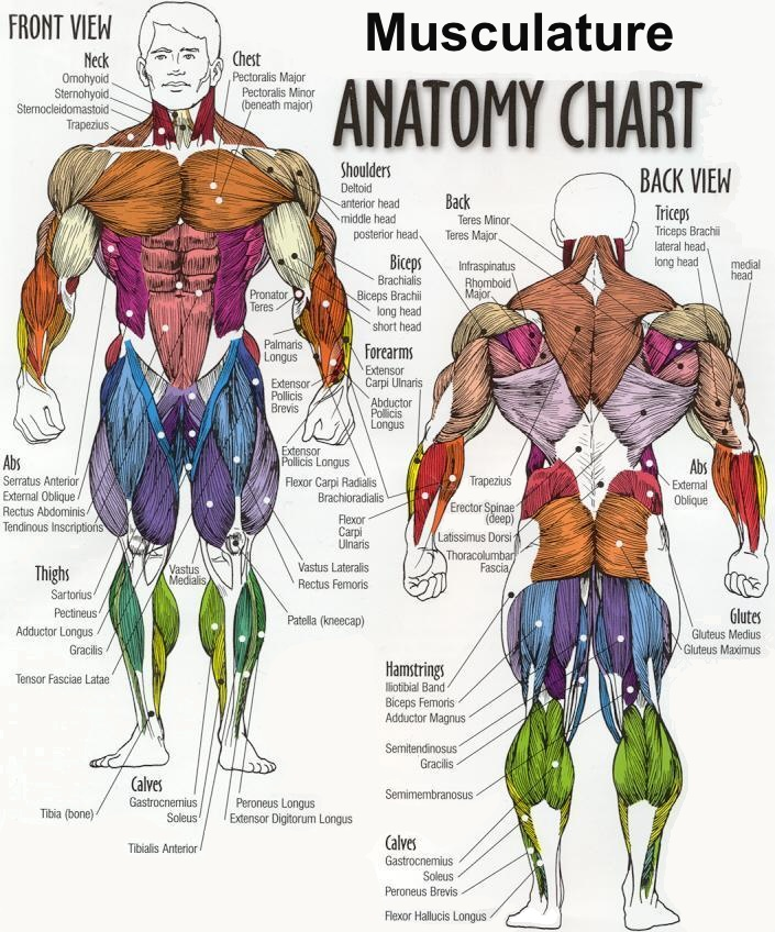 What is the difference between Anatomy and Astronomy?