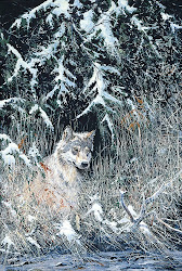 'Canadian Timber Wolf'