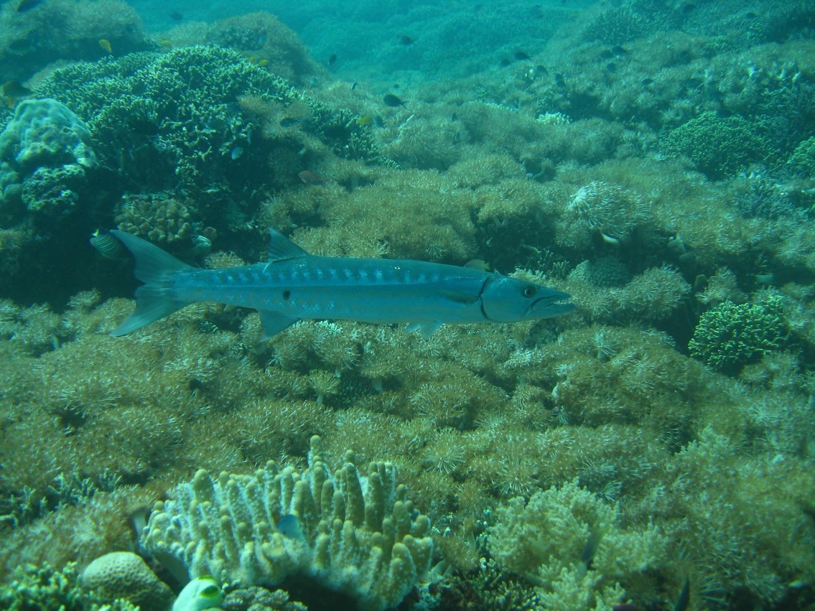 Diving Pemuteran Bali