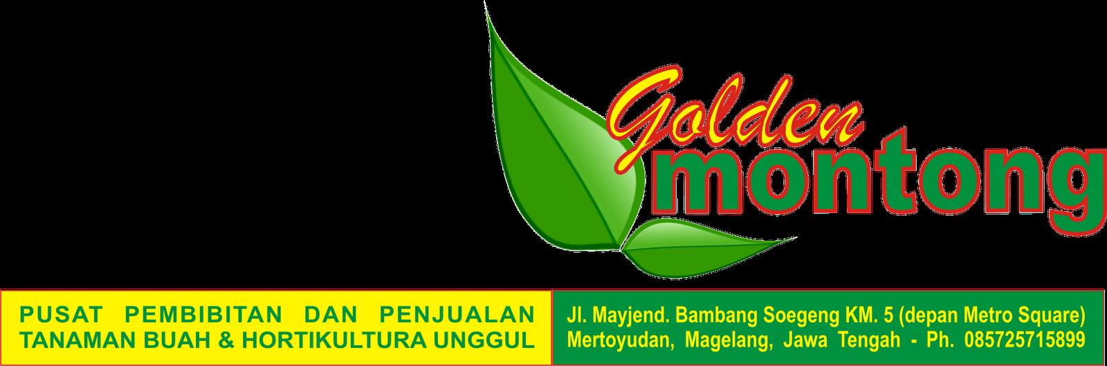 Golden Montong