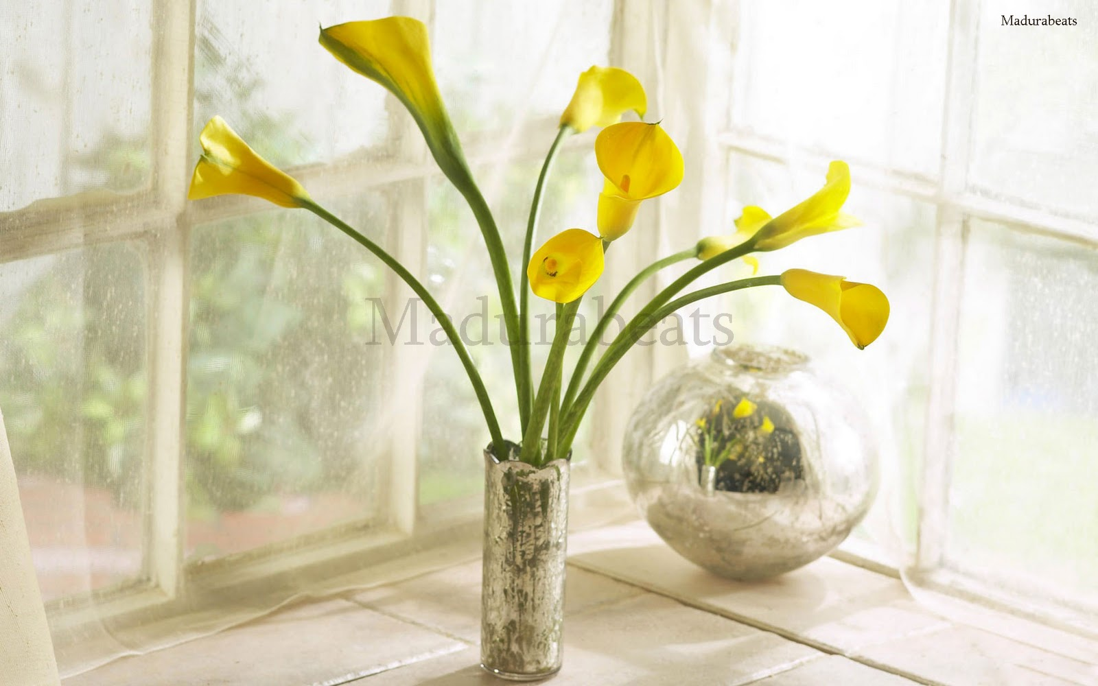 Flower images, Wide screen wallpapers,Yellow_calla_lily_bouquet