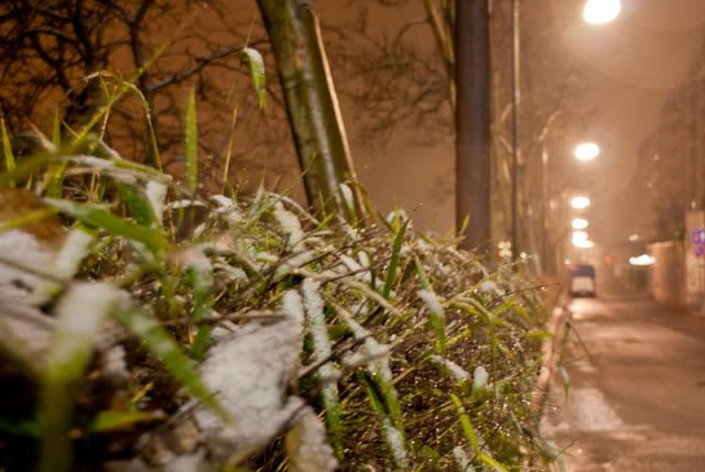 Foto scattata in Lungo Po Machiavelli, prima nevicata del 2013