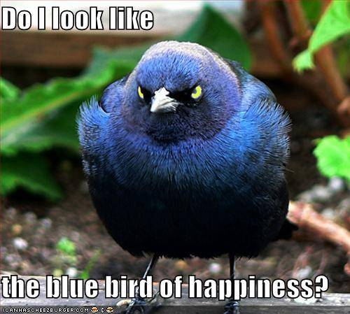 Do I look like the bluebird of happiness. Funny Animal Pics. No copyrights claimed