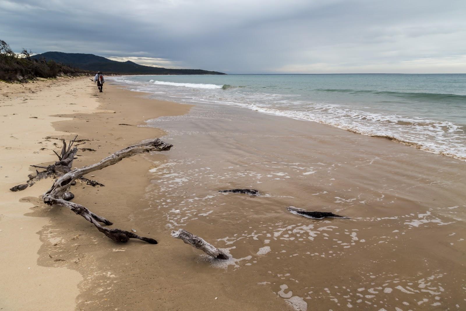 timber on three mile beach wilsons promontory