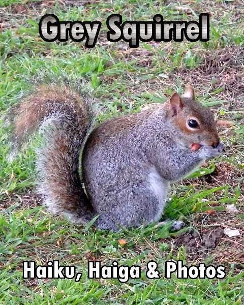 Grey Squirrel - Haiku & Contemporary Haiga