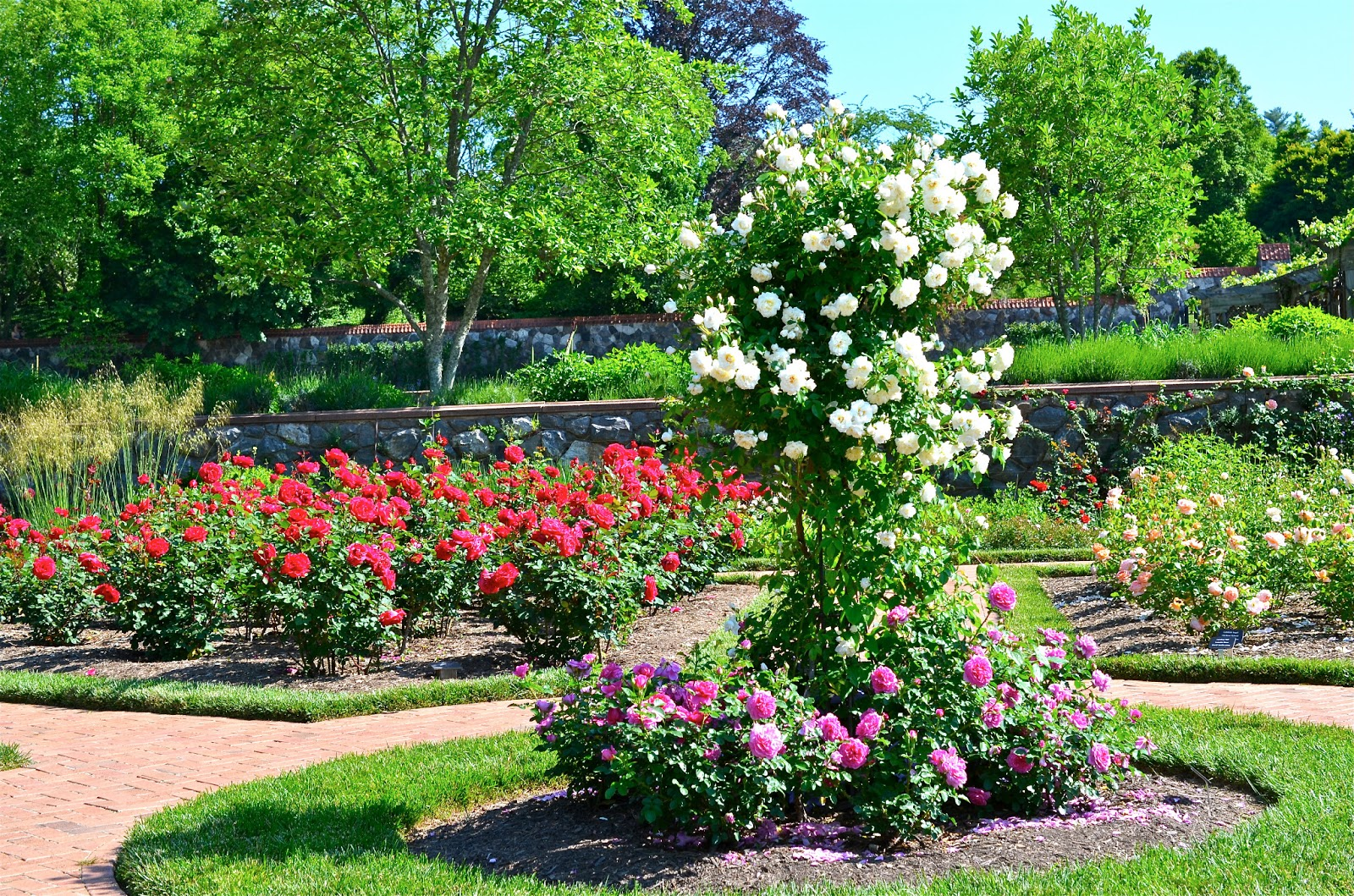 The most beautiful rose garden in the world for Beautiful garden pictures of the world