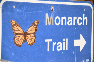 Monarch Trail | Papillon Monarque, Santa Cruz, Californie
