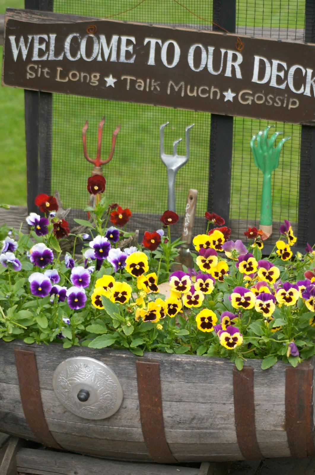 Pansies and Garden Scratchers on the Deck www.organizedclutterqueen.blogspot.com