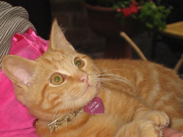 Tigger Kitten England