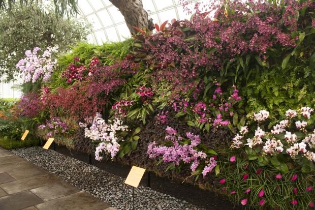 jardim vertical de orquideas
