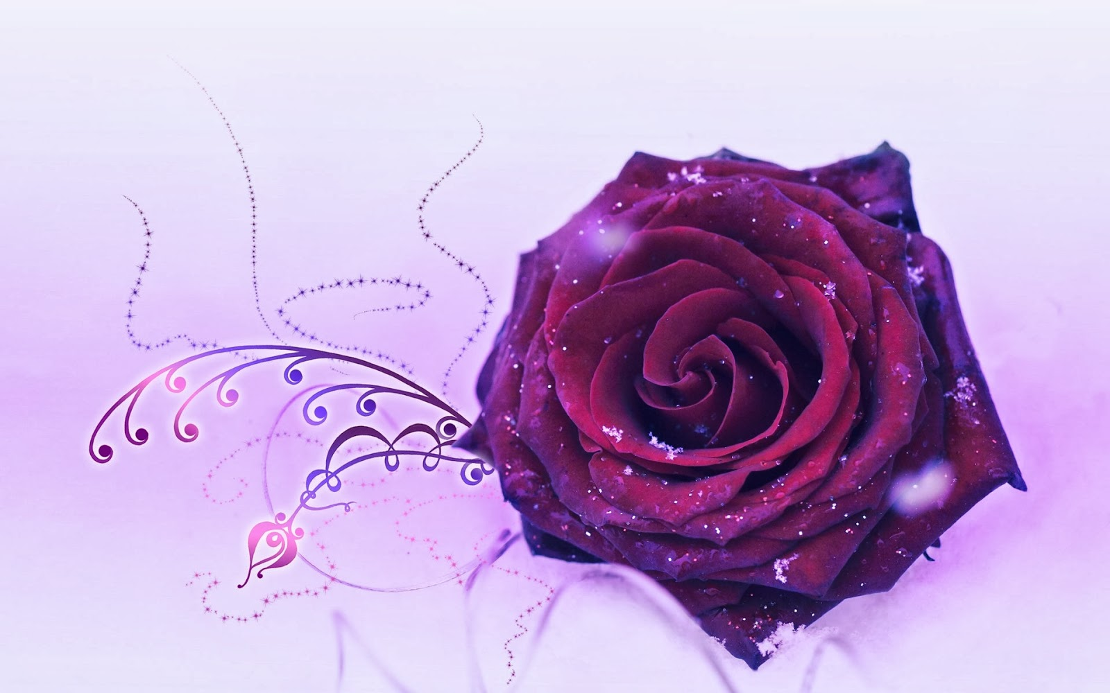 Purple rose wallpapers keywords here for Purple rose pictures