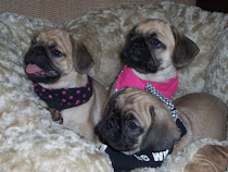 Triple Trouble !! George,Sidney and Milly