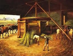 produção cana de açúcar