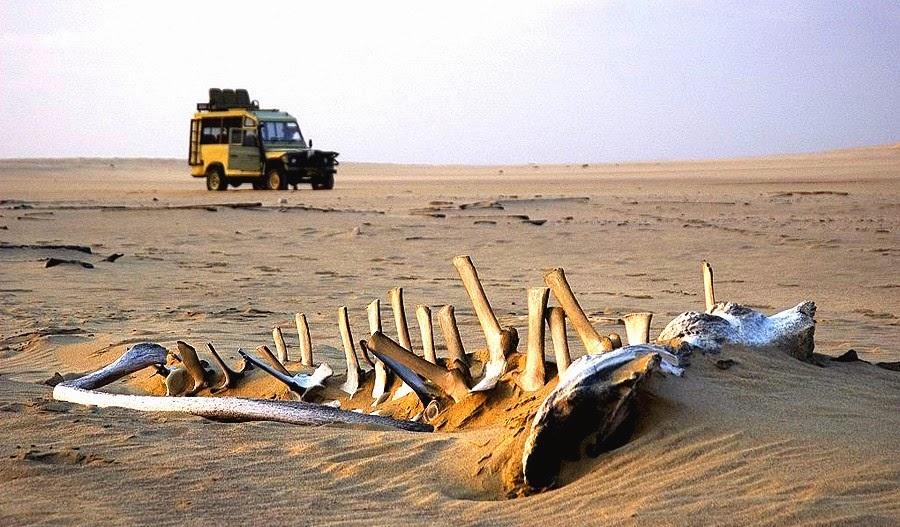 Skeleton Coast Namibia Tours