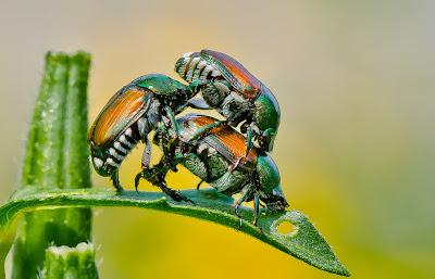 ¿Qué está pasando aquí? Que alguien me explique... - What is going on here insectos
