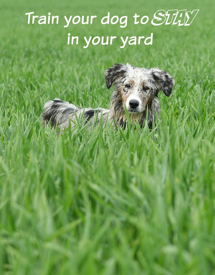 How To Train Your Dog To Stay In Unfenced Yard