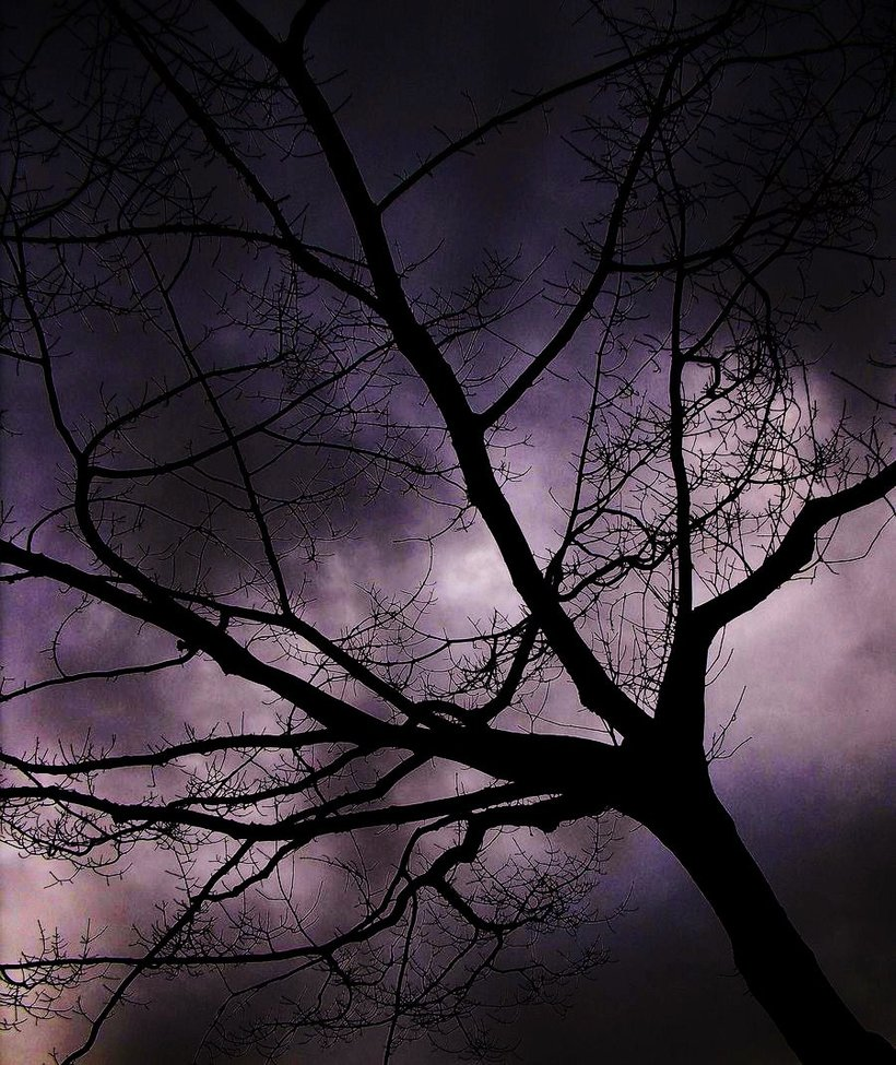 Something wicked this way comes happy arbor day now for Creepy trees for halloween