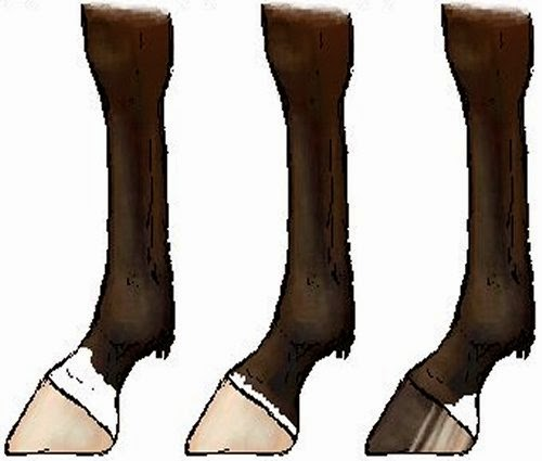 Socks picture 1
