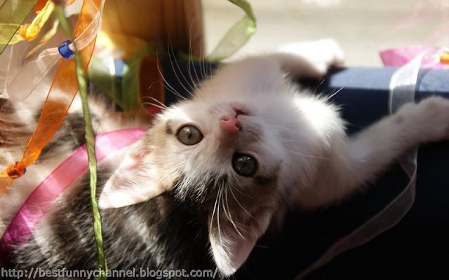 Sweet kitten.