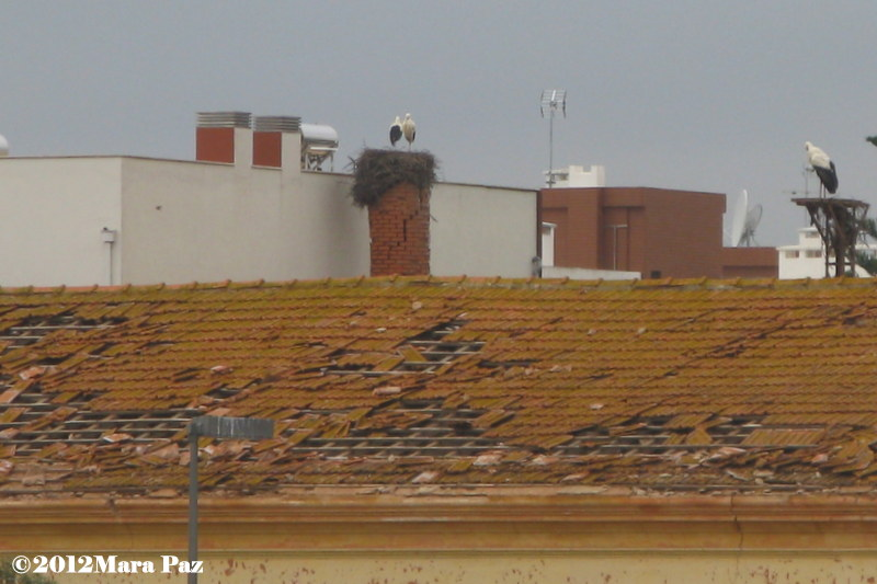 Tornado damage to Silves' rooftop