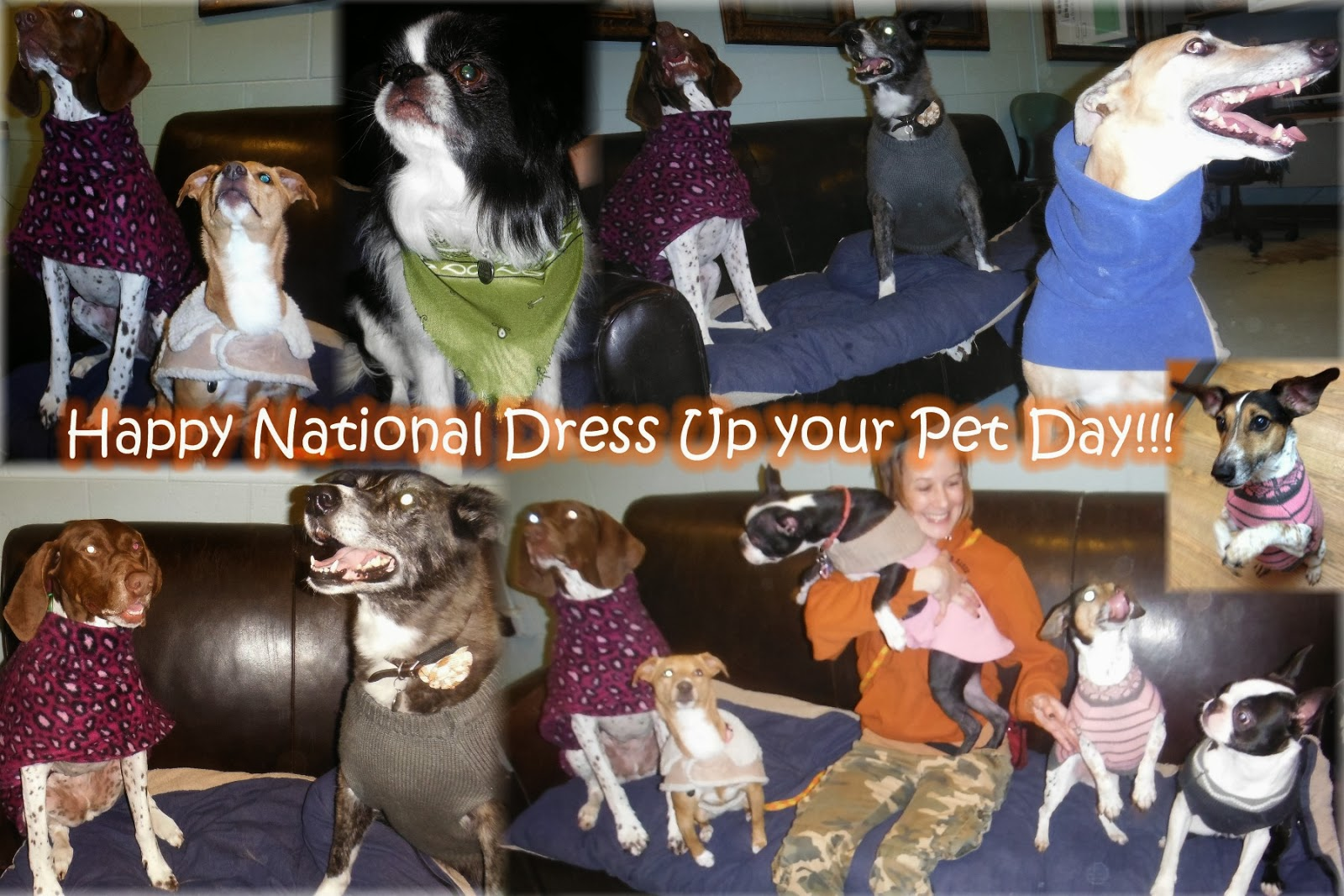 Dress up your pet day - National Dress Up Your Pet Day