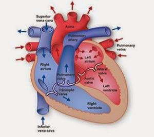 Cara Menyembuhkan gagal jantung kongestif