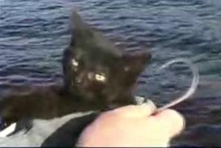 Gato e o Anzol