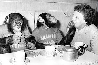 chimpanzee tea party