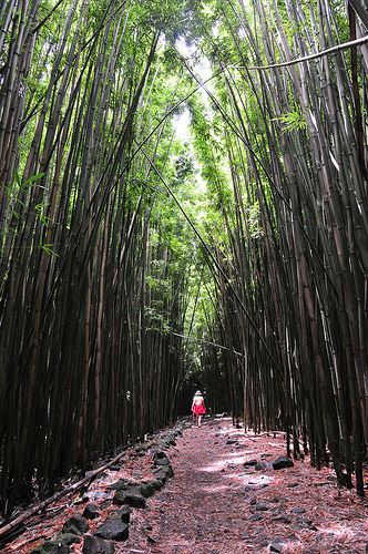 Bamboo Forest Maui5