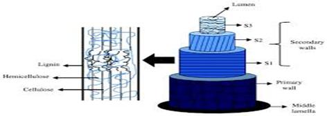 Structure of coir fiber