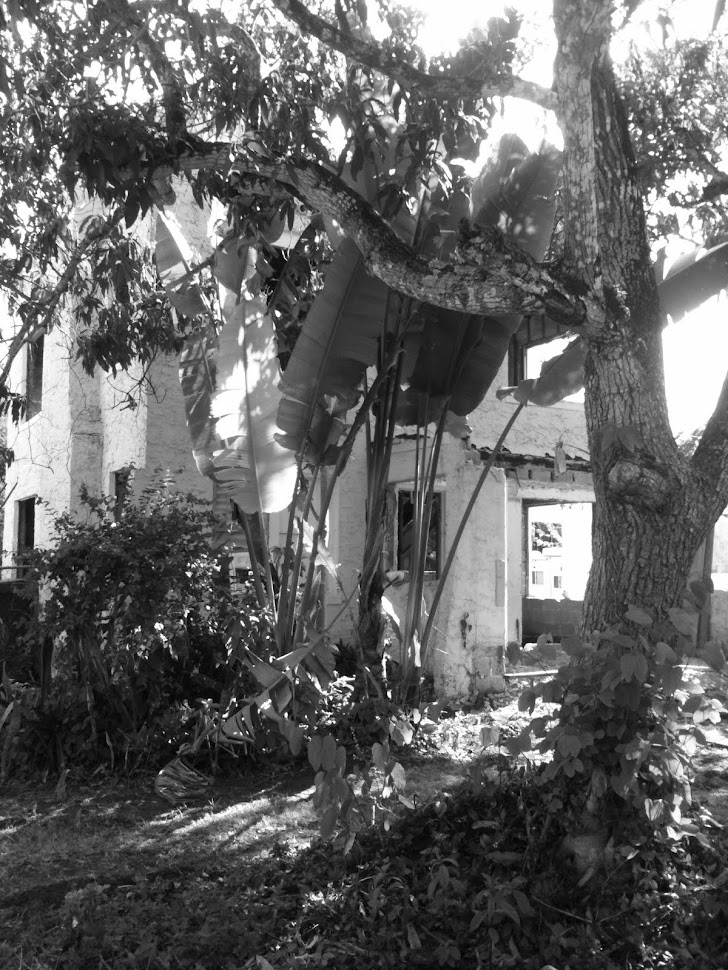This Old Coconut Grove