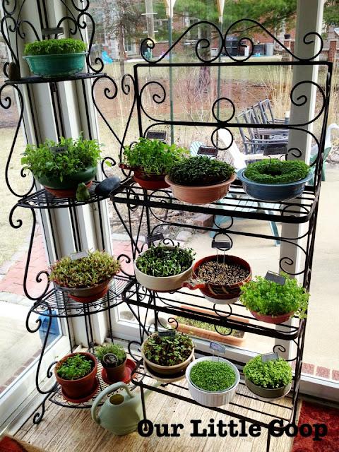 gardening microgreen garden plants