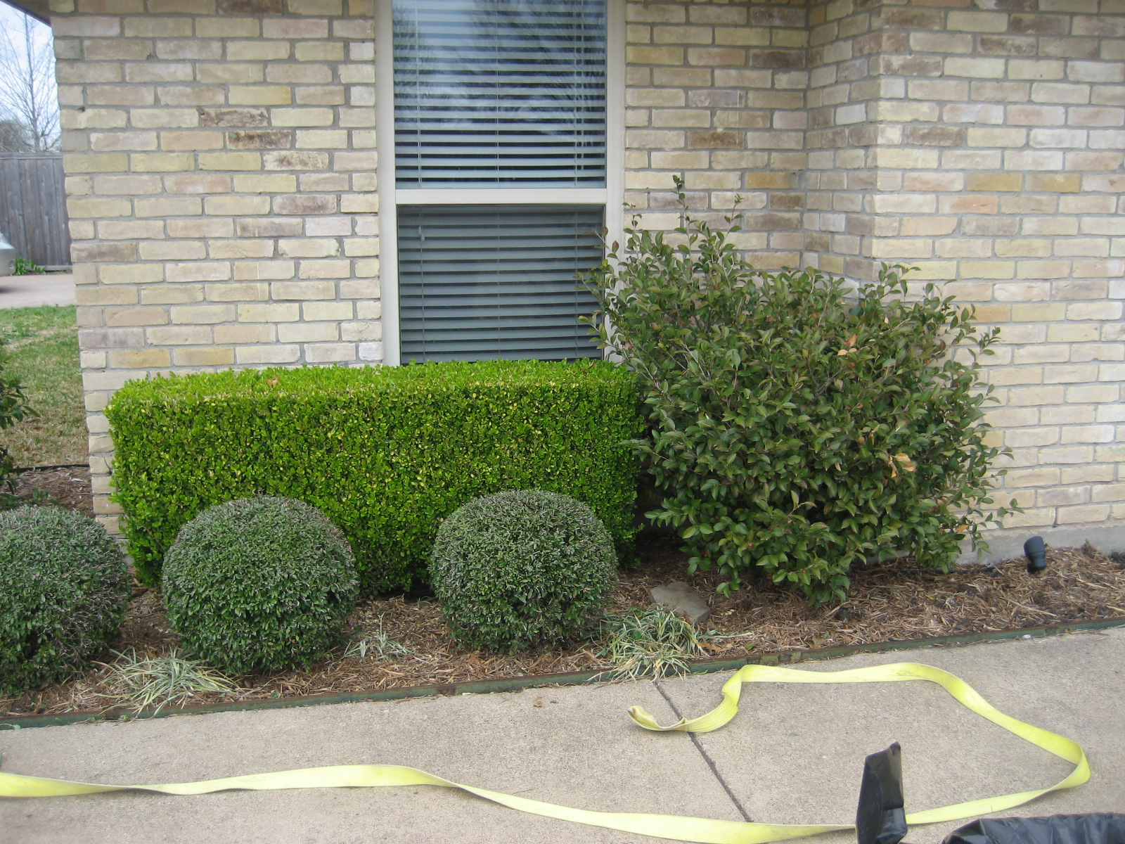 Boxwood shrubs for front of house for Low bushes for landscaping