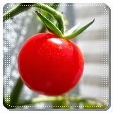 Cara Diet dengan Tomat